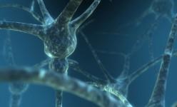 Neuron129