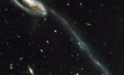 toadpolegalaxy