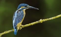 3d art hakeem rafai hummingbird